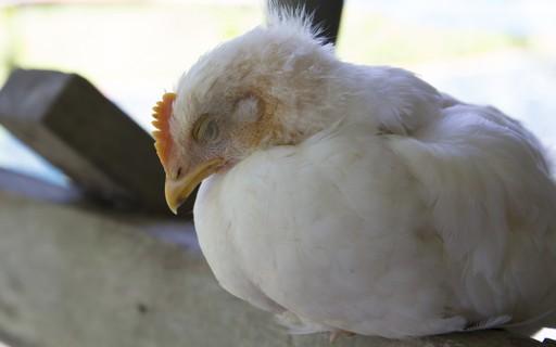 China confirma seis novos casos de Influenza aviária em humanos ...