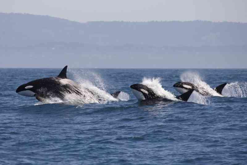 Depois do enorme clamor internacional, mamíferos marinhos são ...