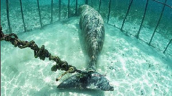 Mamíferos marinhos em cativeiro: descoberta bizarra