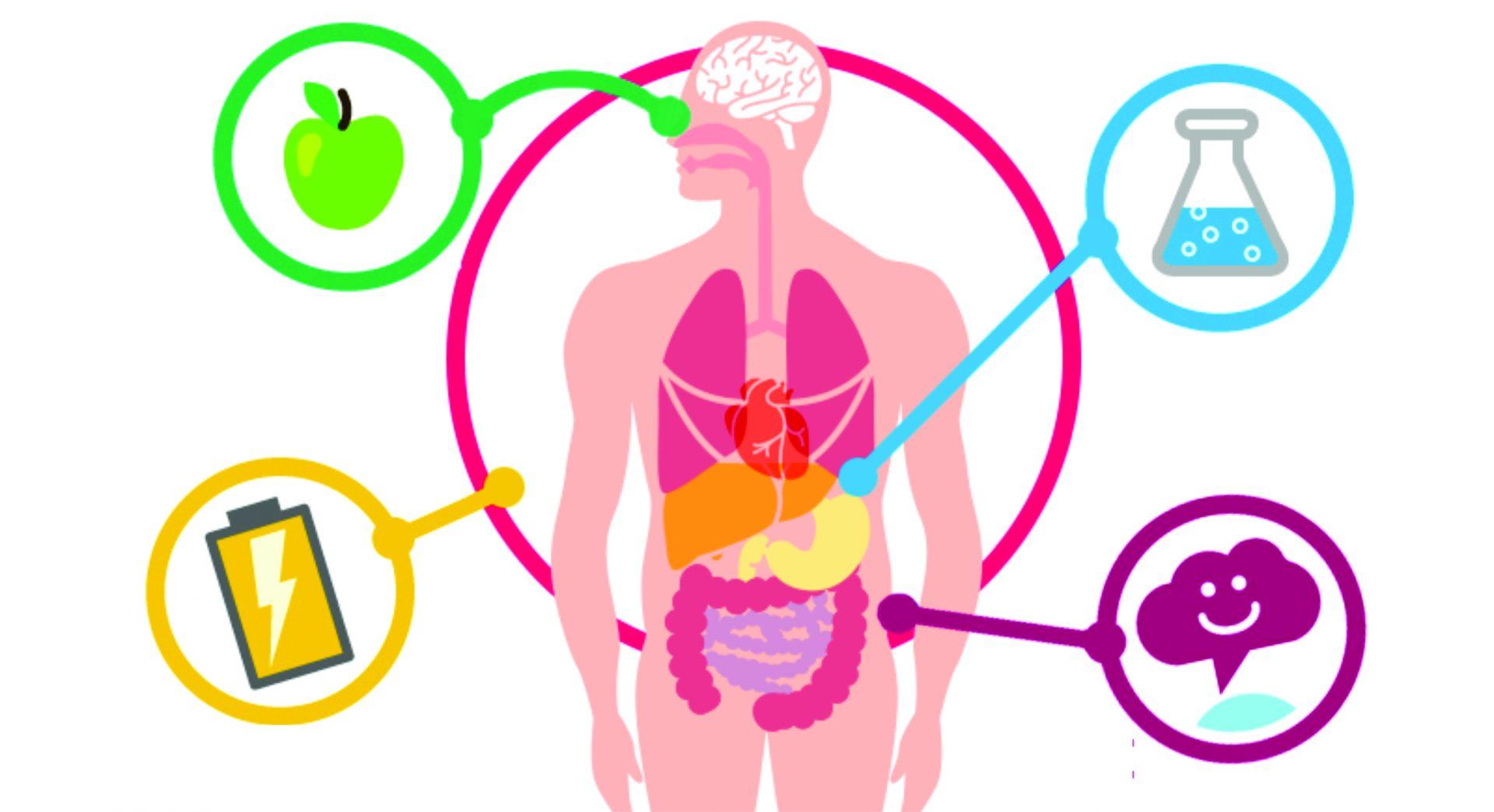 Metabolismo, o que é? Definição, características, funções e tipos principais
