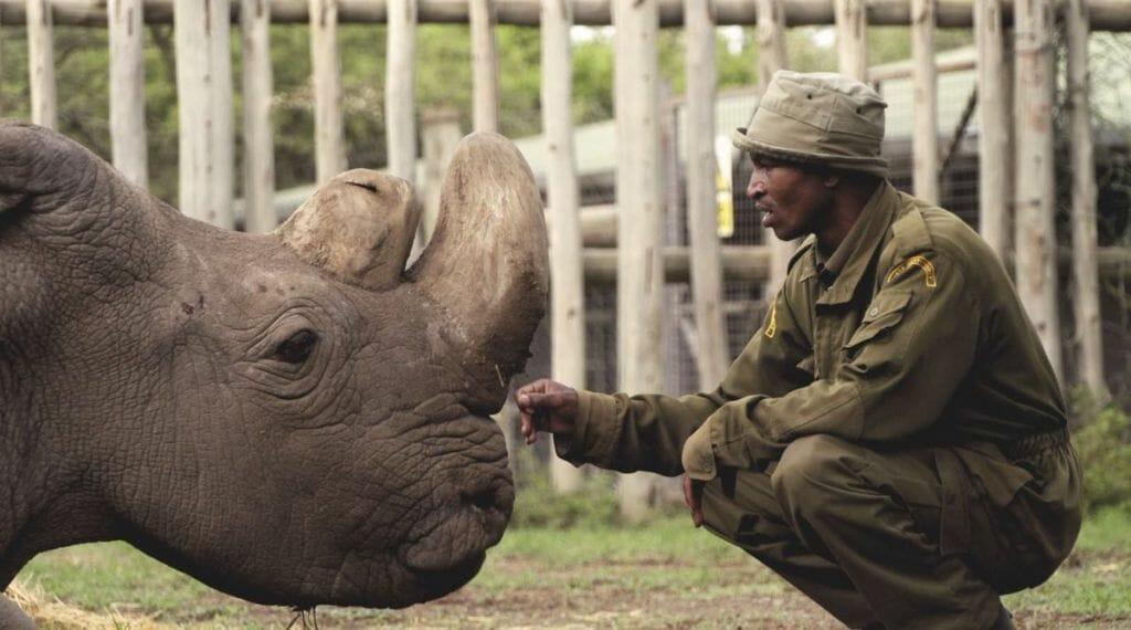 Quênia considera criar pena de morte para caçadores | Hypeness ...