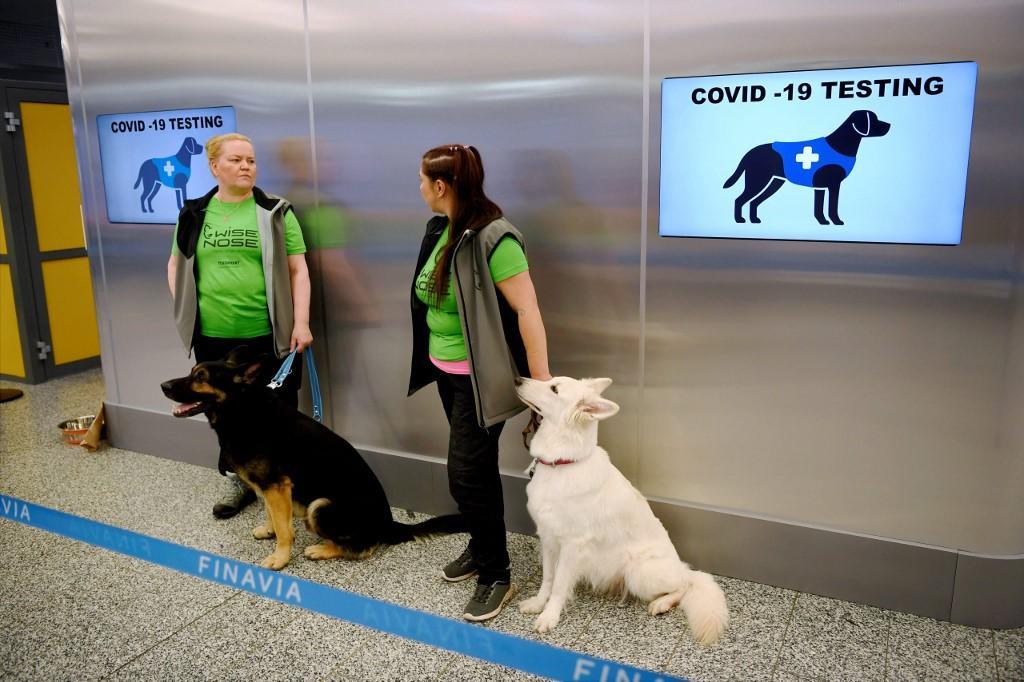 Cães são usados para detectar coronavírus em aeroporto na Finlândia - Mundo - Diário do Nordeste