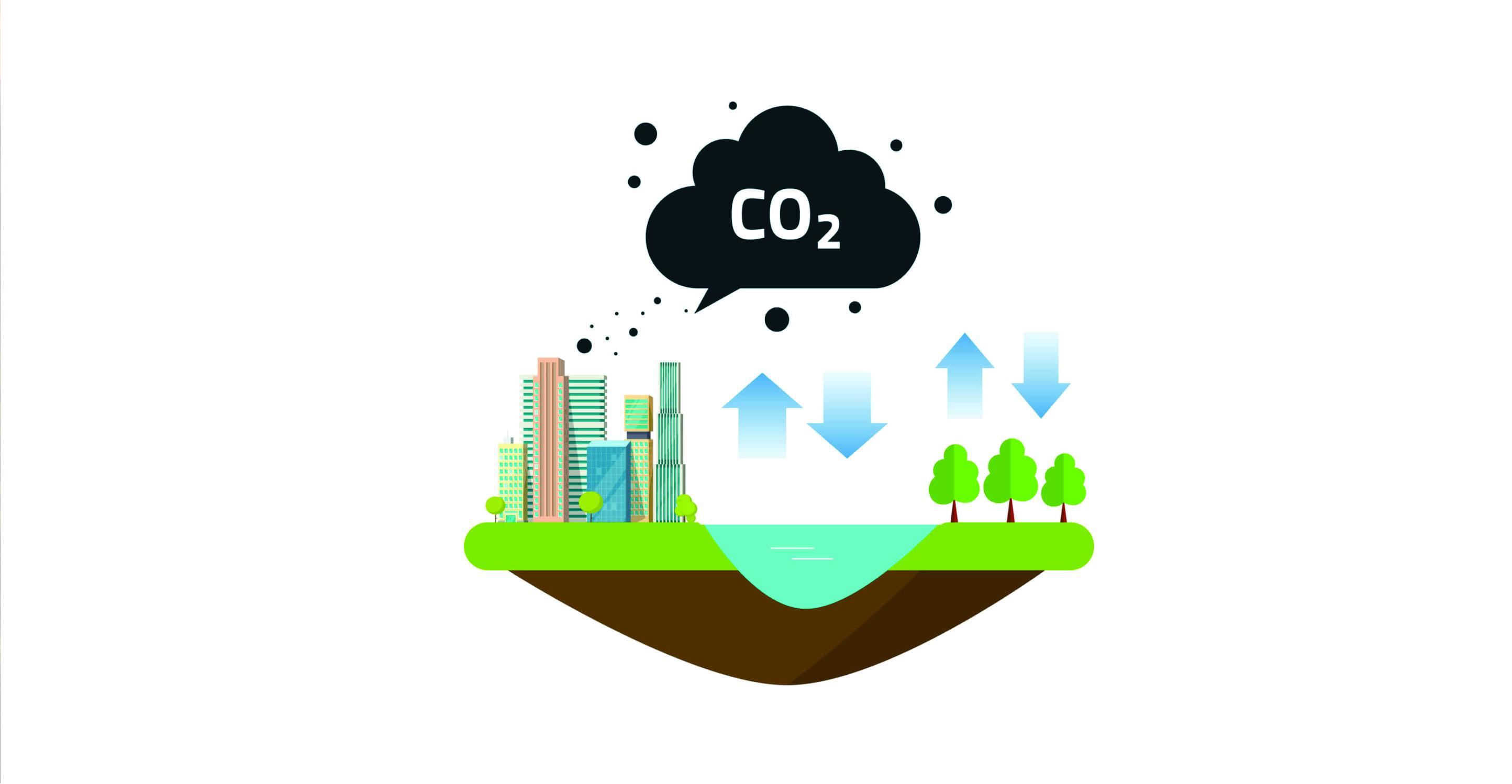 Sequestro de carbono florestal: precificação e rentabilidade econômica -  Blog Mata Nativa