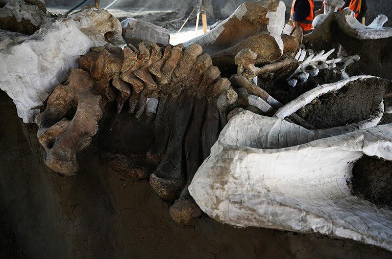 ossos de mamute corpo 2