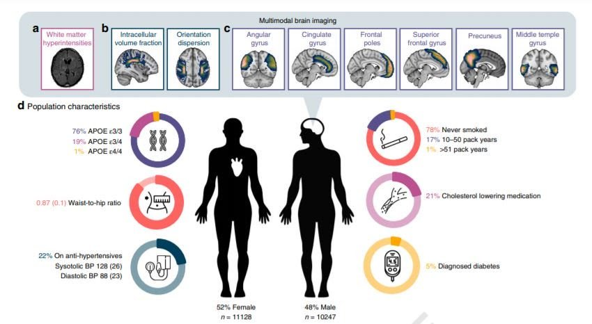 figura do papel do cérebro da diabetes