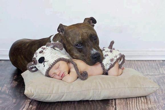 Fotos emocionantes que provam por que os bebês precisam de cães