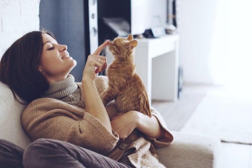 A sensitividade dos gatos