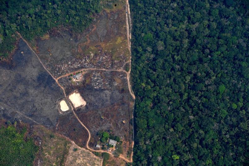 Geral - Desmatamento na Amazônia derrubou o equivalente ao território do  Chile nas últimas três décadas