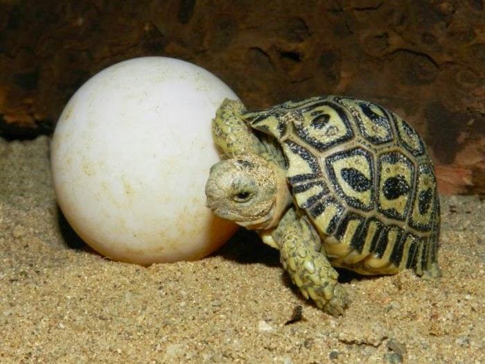 Brunno89r: Sonhos com... Ovos de Tartaruga!?