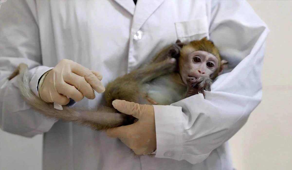 Coronavírus: Laboratório chinês obtém sucesso em teste de vacina em macacos, diz agência