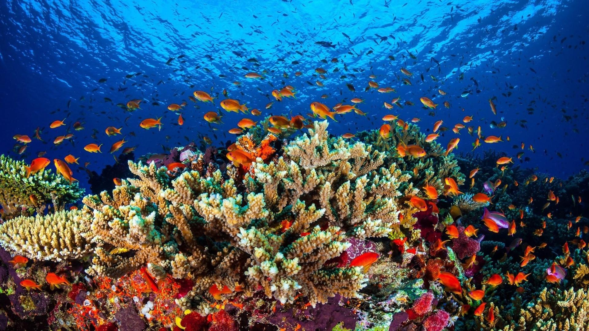 Grande Barreira de Corais está mais ameaçada do que se pensava - 23/02/2016  - UOL Notícias