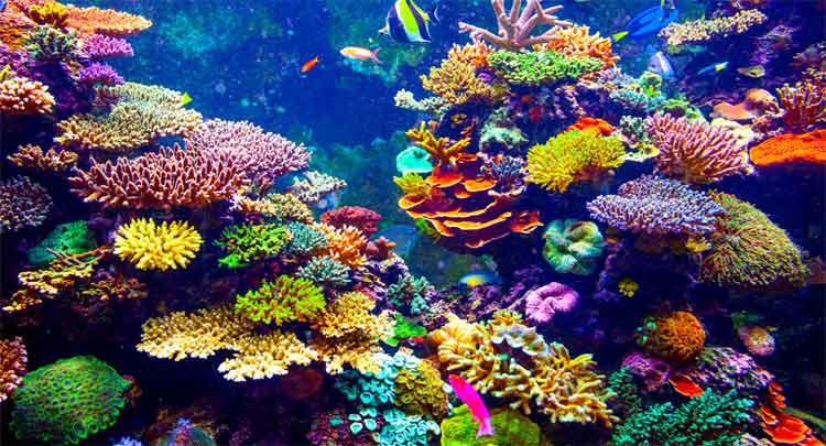 Corais: o que são recifes de coral, caraterísticas tipos - Planeta Biologia