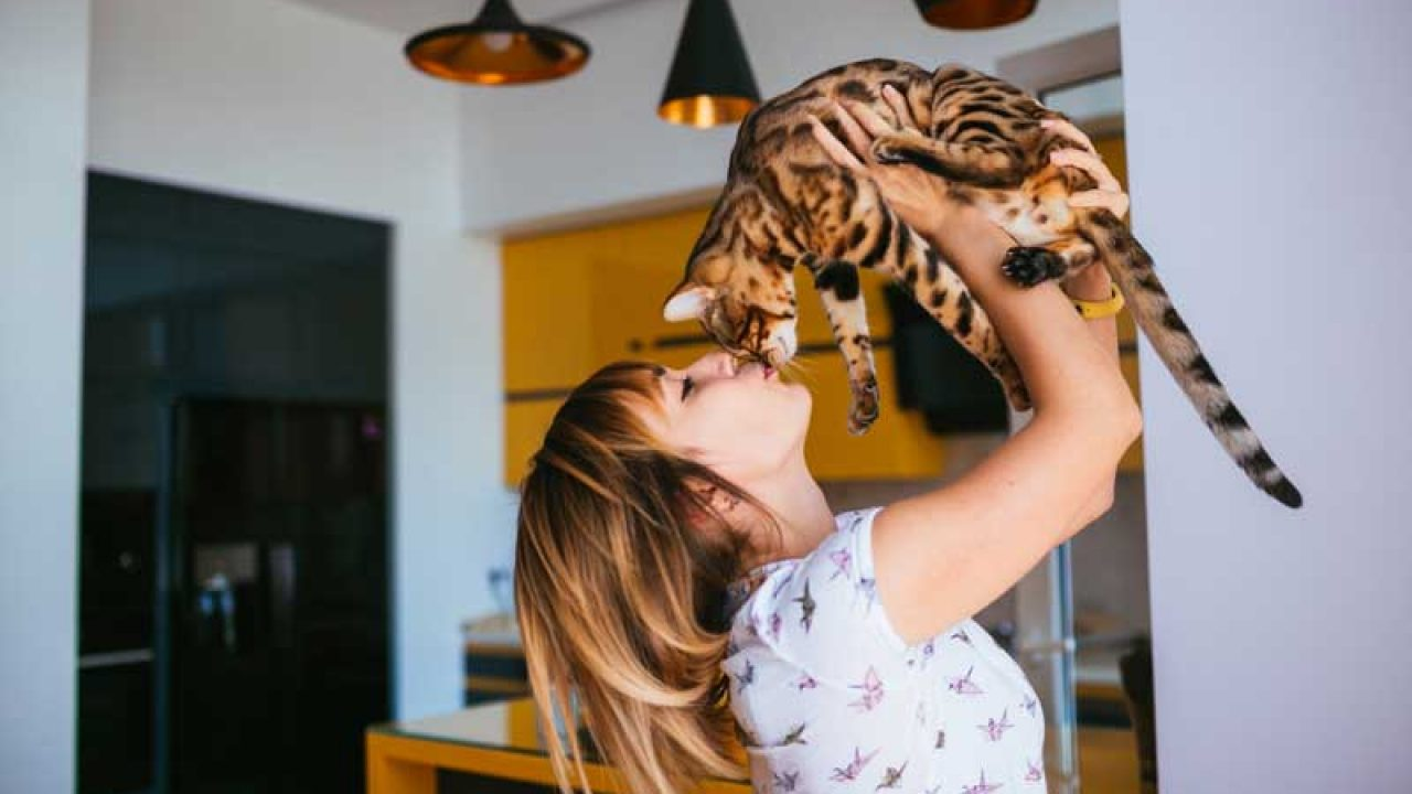 Quem tem gato é mais feliz e mais saudável - Jornal de Piracicaba - Desde 1.900