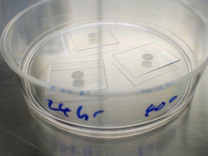 Vírus seco em vidro 24 horas