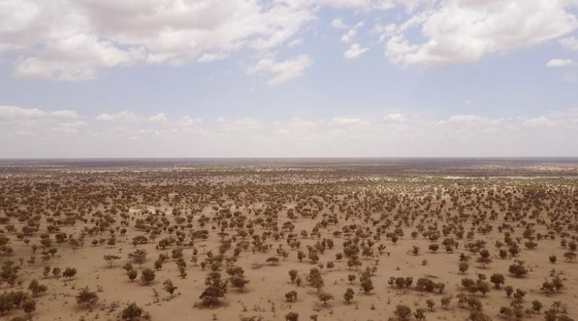 """Grande Muralha Verde"""", a aposta africana para uma recuperação pós-pandemia - ClimaInfo"""