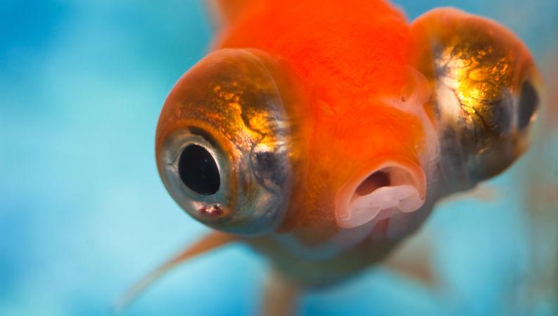 Olhos de peixe podem ajudar oftalmologia humana - Saúde Online