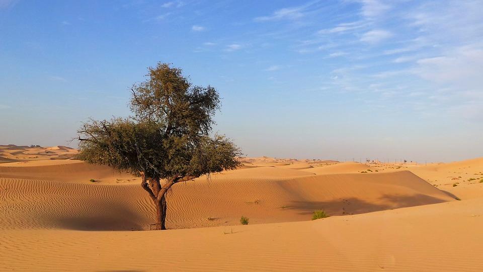 Desert Sand Tree Abu - Free photo on Pixabay