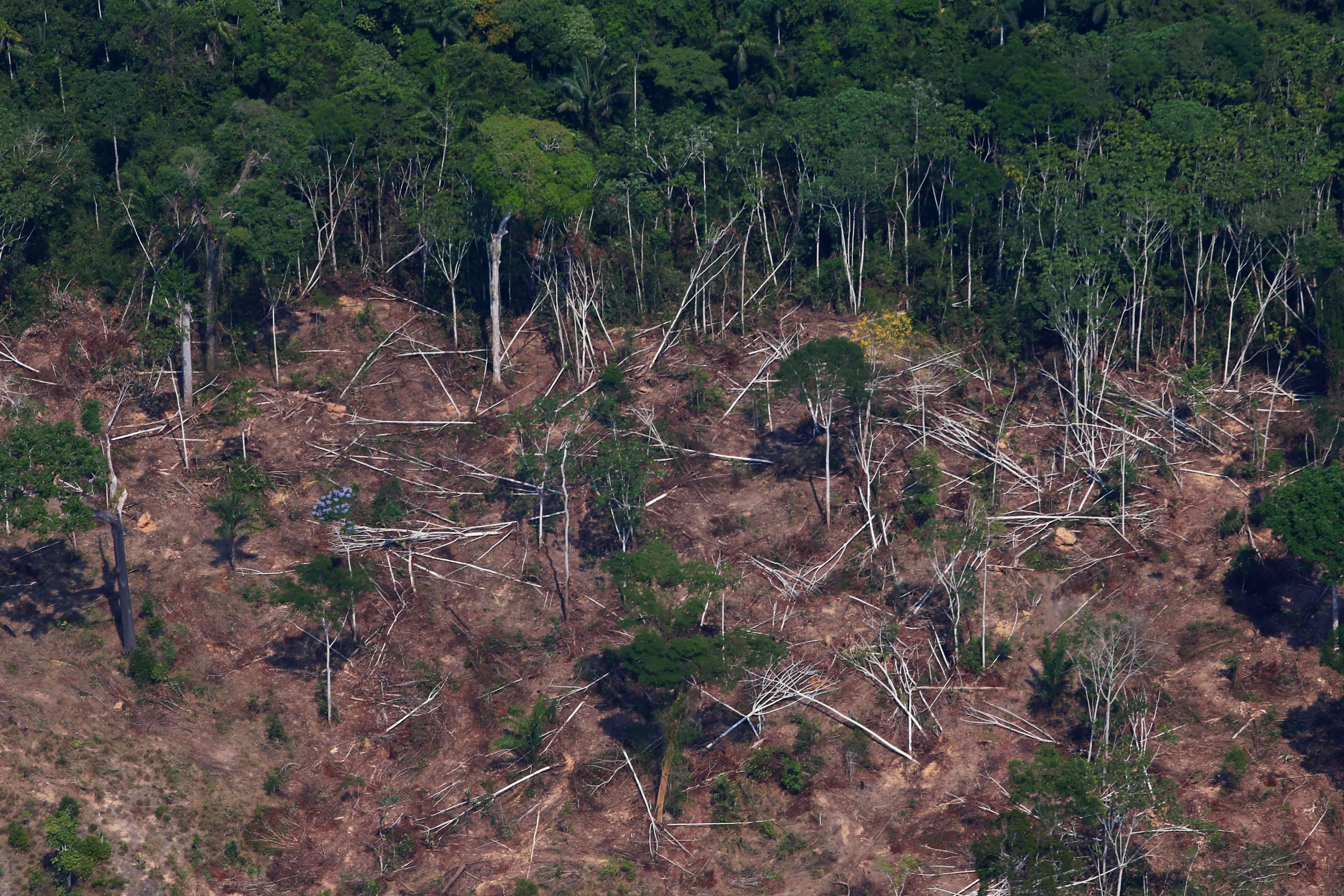 Coronavírus não detém madeireiros e desmatamento no Brasil aumenta   Exame