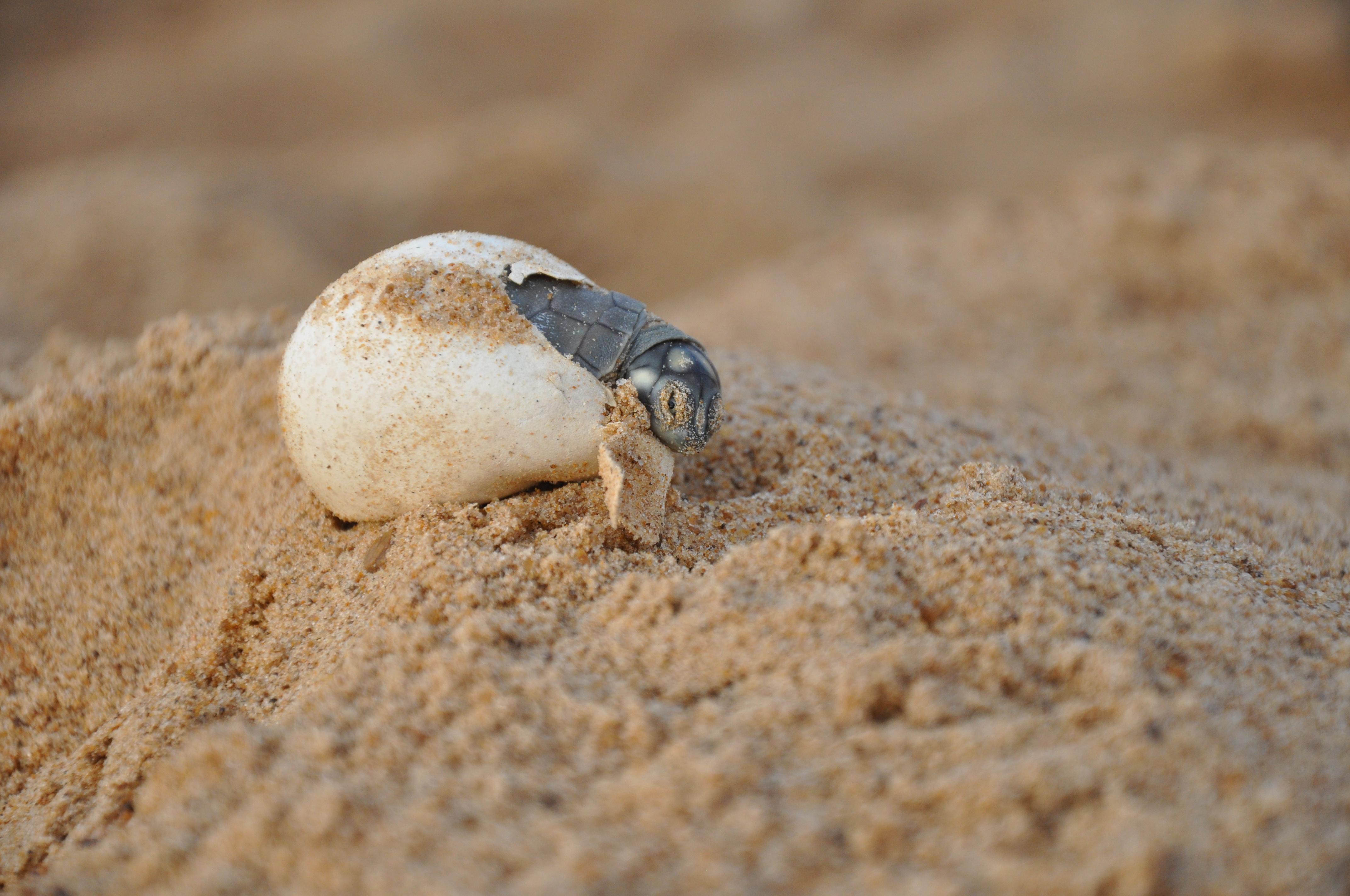 Em cartaz: o nascimento das tartarugas-da-Amazônia | WWF Brasil