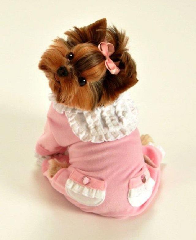 Cachorrinhos de pijama que dão vida no dia a dia