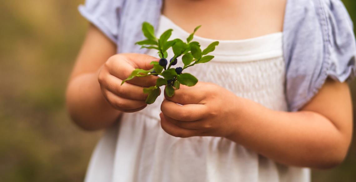 Creches na Finlândia construiu um 'piso de floresta' e mudou o sistema imunológico das crianças