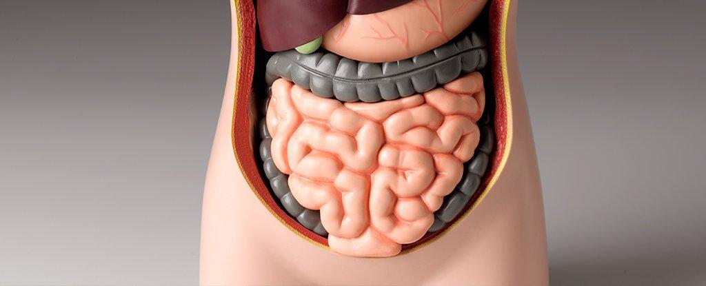 Bactérias da boca têm sido associado a formas graves de doença inflamatória intestinal