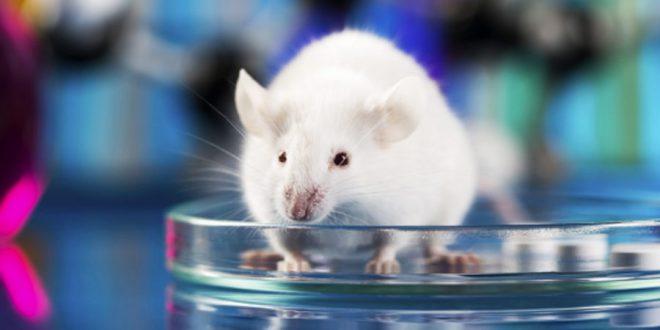 Pesquisa da UL aponta que Inteligência Artificial é mais eficiente que testes com animais em laboratório | Green FM