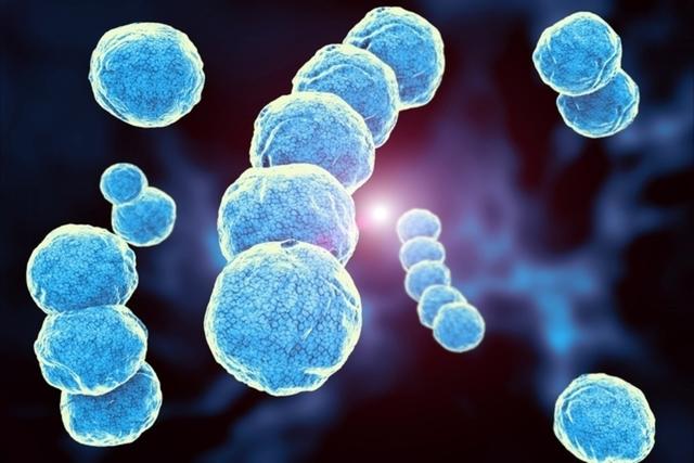 Streptococcus pyogenes: sintomas e tratamento (das principais doenças) -  Tua Saúde