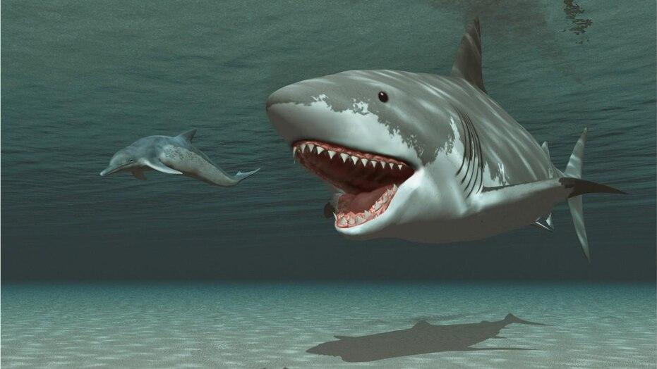 O que selou o destino do tubarão Megalodon gigante? Seus dentes antigos podem revelar a resposta