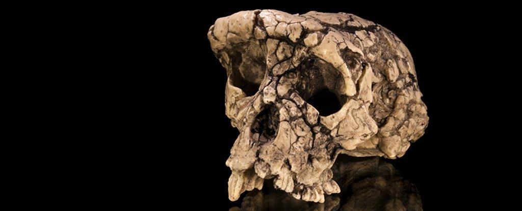 Crânio controverso de 7 milhões de anos pode não ter sido tão humano quanto pensávamos