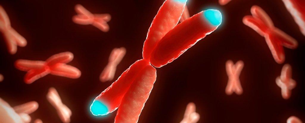 Cientistas dizem que reverteram parcialmente um processo de envelhecimento celular em humanos