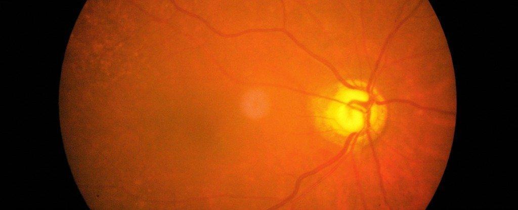 Cientistas acabaram de regenerar células do nervo óptico de camundongo em laboratório