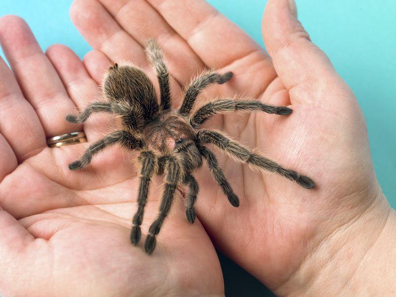 Sonhar com aranha picando. Você sabe o que significa?