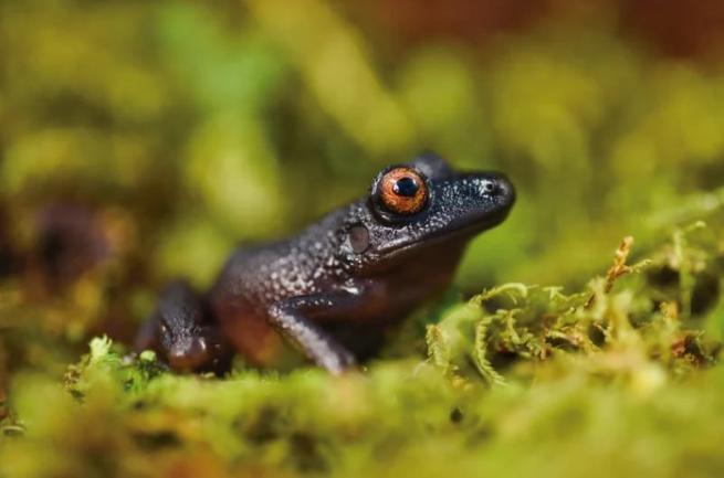 Montanhas Nebulosas da Bolívia revela diversas espécies novas para a ciência