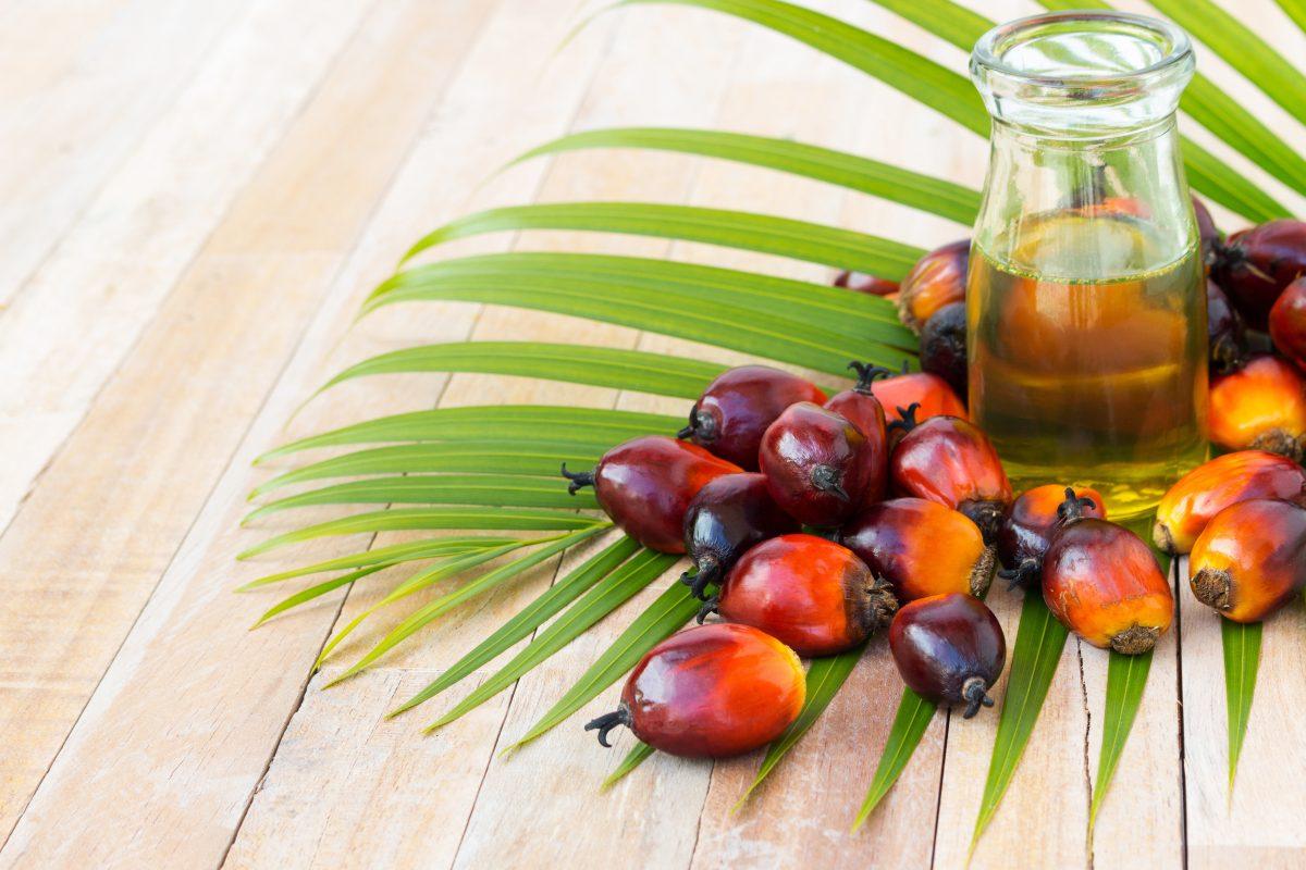 Sim, o óleo de palma é prejudicial. Mas o boicote pode estar piorando as coisas