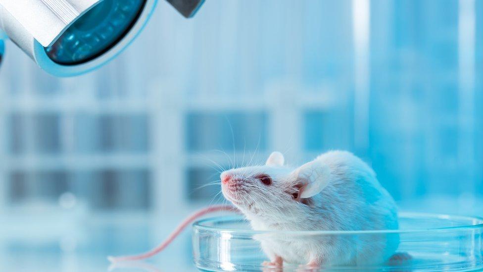Rosa mosqueta': o que é o novo neurônio que está fascinando os cientistas -  Notícias - R7 Tecnologia e Ciência