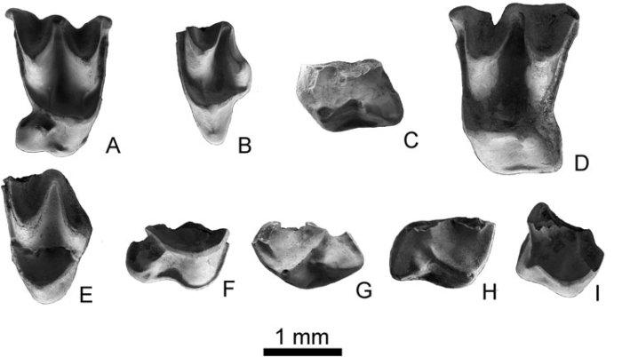 novos dentes de morcego