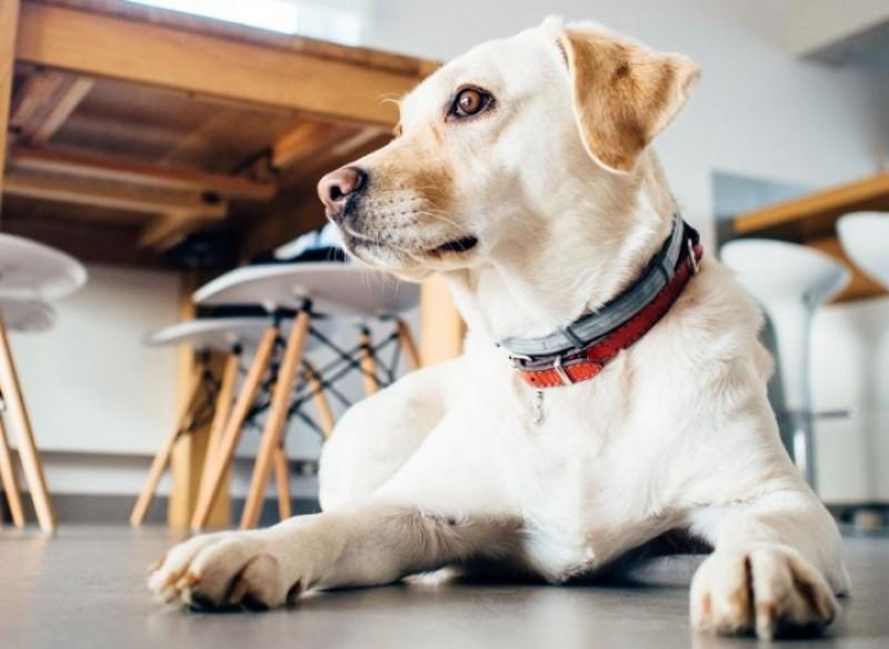 Estudo comovente mostra os efeitos de longo prazo de gritar com seu cachorro