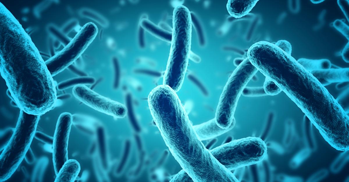Na descoberta inédita, os cientistas confirmam que as bactérias têm um relógio biológico de 24 horas