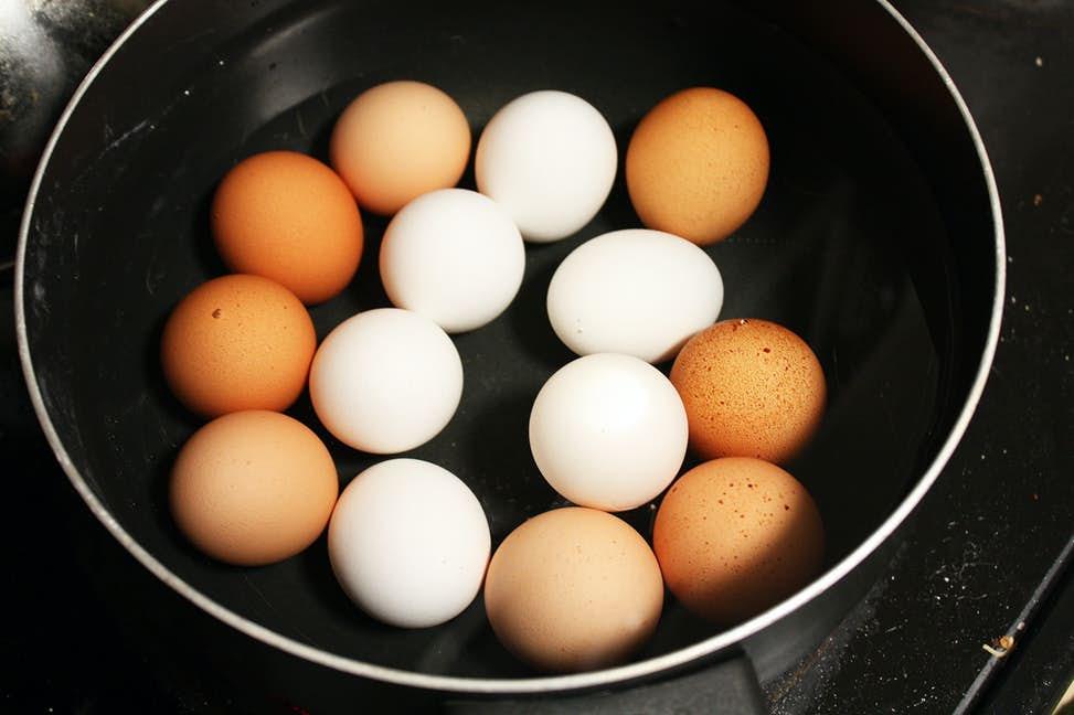 Gemas de ovo estão ajudando os cientistas a entender como prevenir lesões cerebrais
